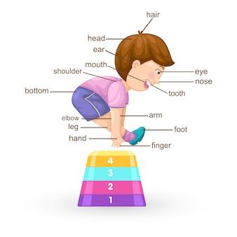 Słownictwo część wektora ciała