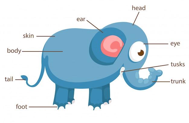 Słownictwo słonia część wektora ciała