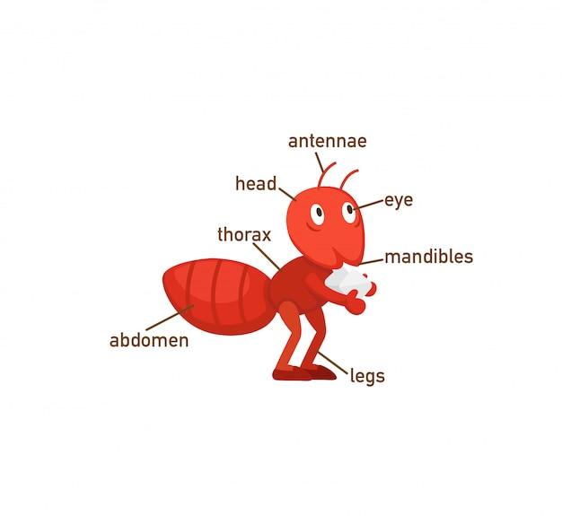 Słownik mrówek część body.vector