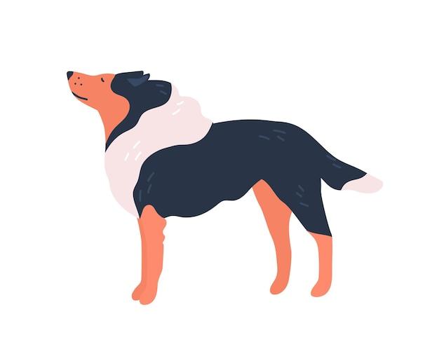 Śmieszne kreskówki rasowe collie pies płaskie ilustracji wektorowych. eleganckie zwierzę ładny charakter na białym tle. przyjazna rasa zwierząt domowych z zadbanym widokiem z boku.