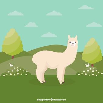 Śmieszne tło alpaki