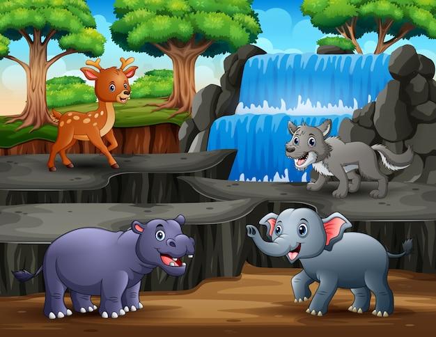 Śmieszne zwierzęta z krajobrazem wodospadu