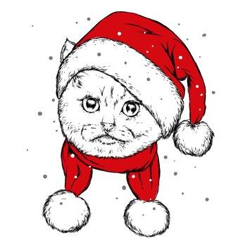 Śmieszny kot w świątecznej czapce.
