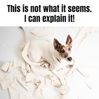 Śmieszny niegrzeczny pies zwierzęcy mem