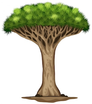 Smocze drzewo krwi