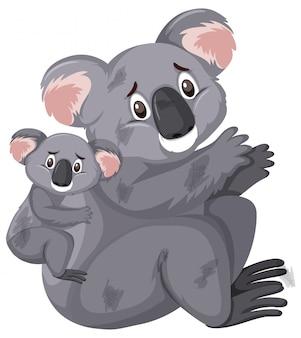 Smutne patrząc koale na białym tle