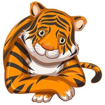 Smutny tygrys na białym tle