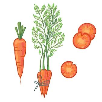 Soczysta pomarańczowa marchewka, pęczek marchewki, plasterki marchwi. świeże warzywa kreskówka.