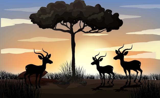 Solhouette gazelle w afryce