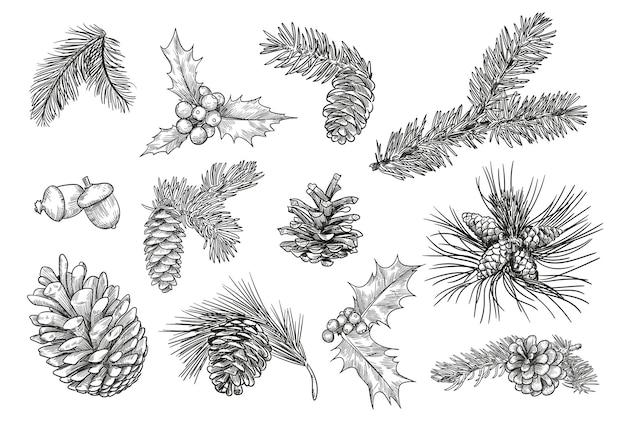 Sosnowe gałęzie na białym tle rysunek ręka zestaw ilustracji