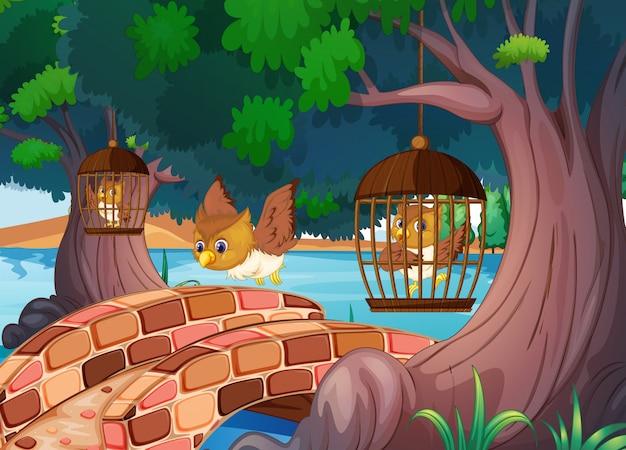 Sowy w klatce na drzewie