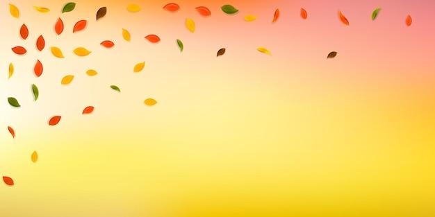 Spadające jesienne liście. czerwone, żółte, zielone, brązowe losowo lecące liście. spadający deszcz kolorowe liście na idealne białe tło. urzekająca wyprzedaż z powrotem do szkoły.