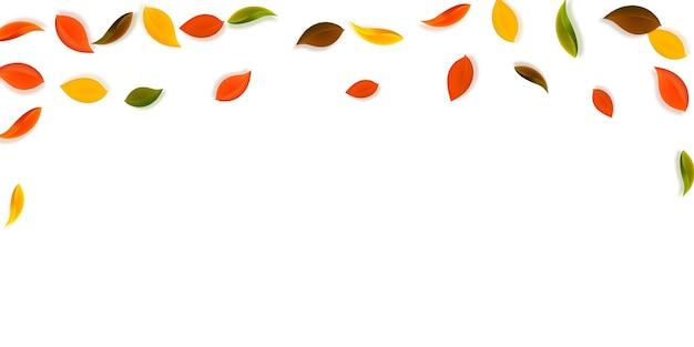 Spadające jesienne liście. czerwone, żółte, zielone, brązowe zgrabne liście fruwające. padający deszcz kolorowe liście na wielkim tle zachodu słońca. piękna wyprzedaż z powrotem do szkoły.