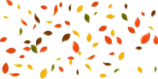 Spadające jesienne liście. latające chaotyczne liście czerwone, żółte, zielone, brązowe. spadający deszcz kolorowe liście na niesamowitym tle zachodu słońca. urzekająca wyprzedaż z powrotem do szkoły.