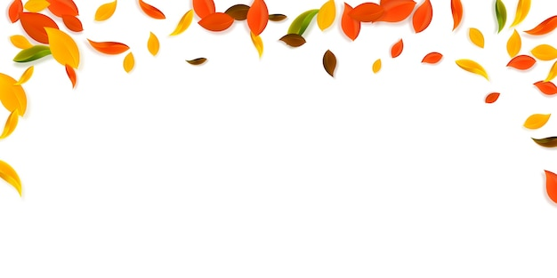Spadające jesienne liście. liście chaotyczne czerwone, żółte, zielone, brązowe latające. padający deszcz kolorowe liście na wspaniałym tle zachodu słońca. urzekająca wyprzedaż z okazji powrotu do szkoły.
