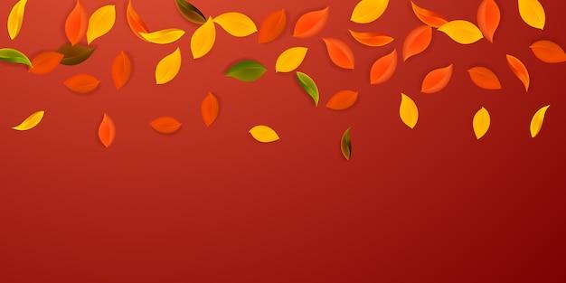 Spadające jesienne liście. liście czerwone, żółte, zielone, brązowe, latające. gradientowe kolorowe liście na uroczym czerwonym tle. urocza wyprzedaż z okazji powrotu do szkoły.