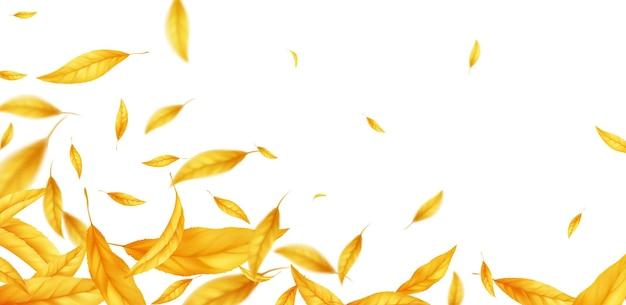 Spadające pływające jesienią liście tło. realistyczny jesienny żółty liść na białym tle. spadek sprzedaż tło. ilustracja wektorowa