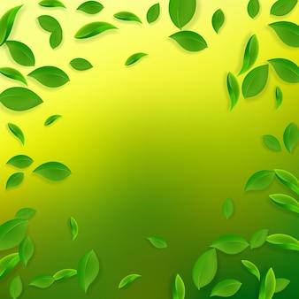 Spadające zielone liście. pływające świeże liście herbaty.