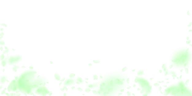 Spadające zielone płatki kwiatów. piękne romantyczne kwiaty padające deszczem. latający płatek na białym szerokim tle. miłość, koncepcja romansu. wspaniałe zaproszenie na ślub.