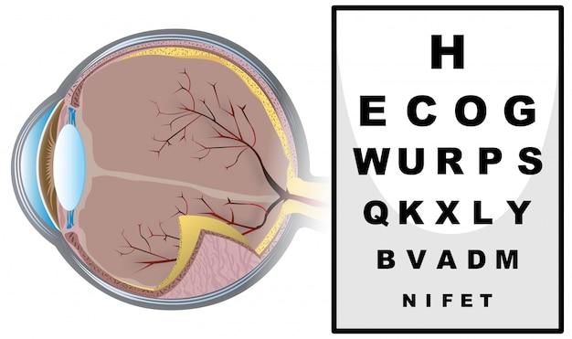 Sprawdzanie wzroku z tablicą do czytania