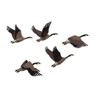 Stado kaczek. stado kreskówek ptaków. ilustracja latających ptaków.