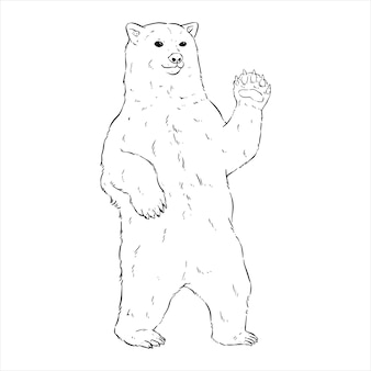 Stojący niedźwiedź polarny z ręcznie rysować lub szkicować styl na białym tle
