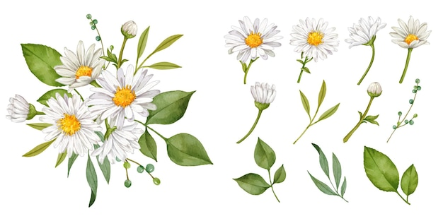 Stokrotka kwiat ręcznie rysowane kolekcja bukiet