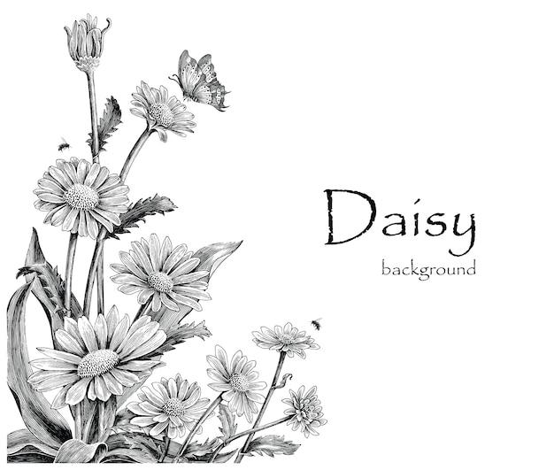 Stokrotka kwiatów ręki rysunkowy rocznik na białym tle