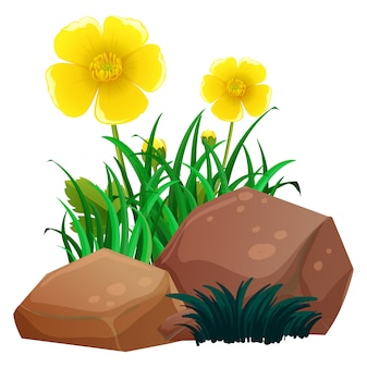 Stokrotka kwitnie z trawą i skałami