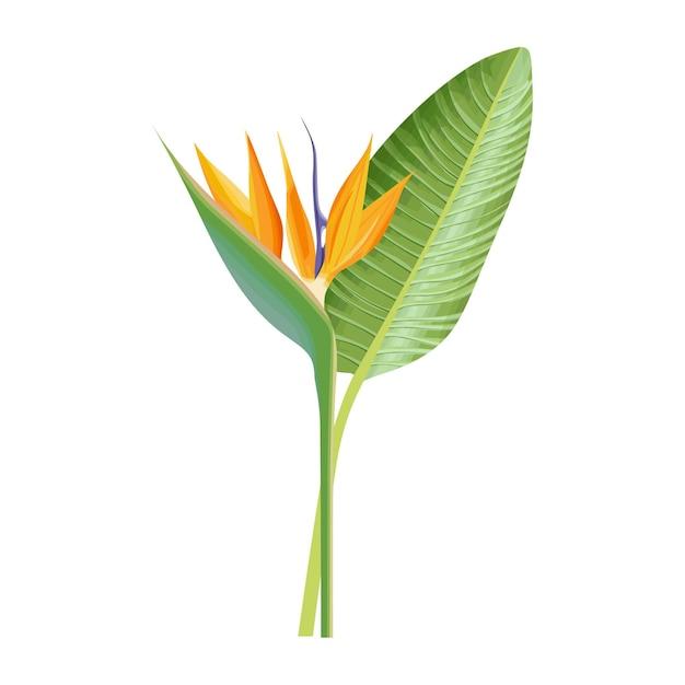Strelitzia reginae zielony liść pomarańczowy i fioletowy kwiat ilustracji wektorowych na białym tle