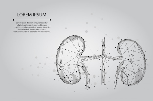 Streszczenie linii zacieru i punkt ludzkie nerki. urology system medycyna leczenie low poly ilustracja