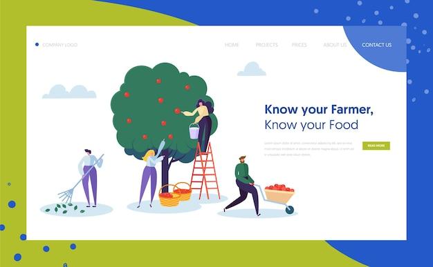 Strona docelowa koncepcja rolnika ogród gospodarstwa krajobrazu. kobieta zbiera jabłka z drabiną. zbieranie postaci dojrzałych owoców organicznych ze strony internetowej lub strony internetowej zielonego drzewa. ilustracja wektorowa płaski kreskówka