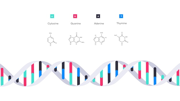 Struktura molekularna ilustracja edukacyjna infografika dna