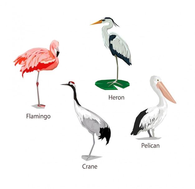 Stylizowany ptak, ptak graficzny, żuraw, flaming, pelikan, czapla, zestaw ptaków.