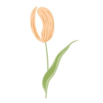 Stylizowany różowy tulipan na białym tle. wiosenny kwiat w stylu bazgroły na dowolny cel.
