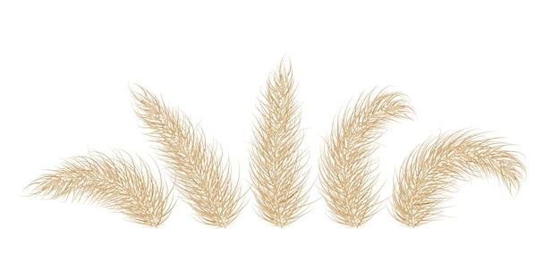 Sucha trawa pampasowa. jedna gałąź trawy pampasowej. wiecha, główka kwiatowa z piór. ilustracja wektorowa
