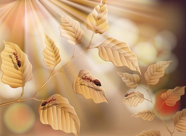 Suchy liść i mrówki w tle przyrody