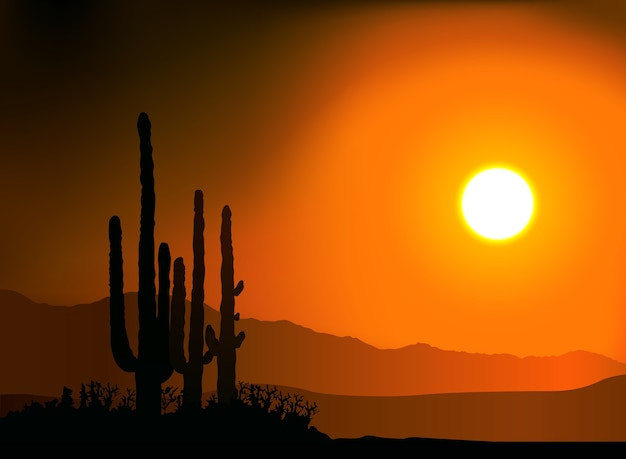 Sunset silhouetting cactus and mountains