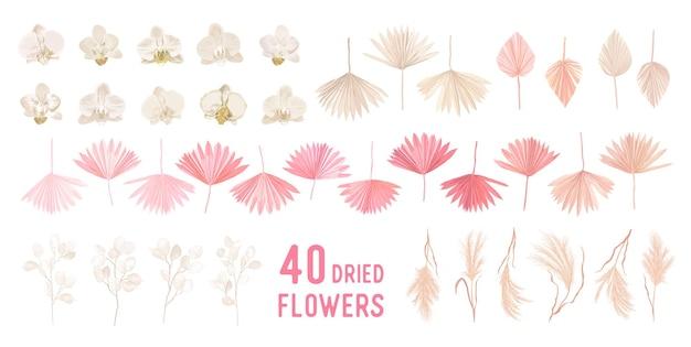 Suszona trawa pampasowa, kwiaty księżyca, orchidea, liście palm tropikalnych wektor bukiety. pastelowy akwarela kwiatowy szablon na białym tle kolekcja na wieniec ślubny, ramki bukietowe, elementy projektu dekoracji