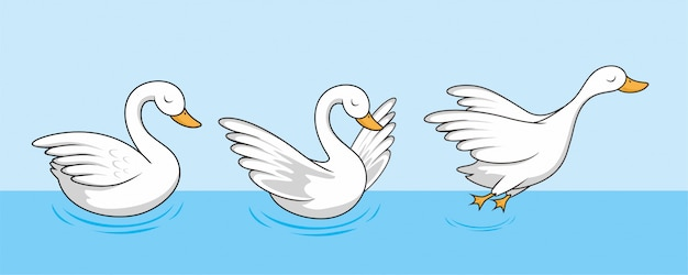Swan cartoon goose cute