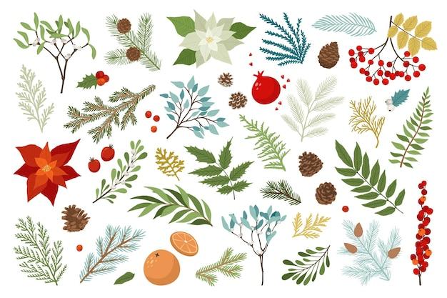 Świąteczna roślina i zestaw kwiatowy to poinsecja, jagody ostrokrzewu, jemioła, gałęzie sosny i jodły, szyszki, jagody jarzębiny. szablon projektu bożego narodzenia i szczęśliwego nowego roku. wakacyjne elementy rysunkowe.
