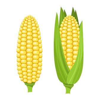 Świeża dojrzała kolba kukurydzy. kolorowa ilustracja