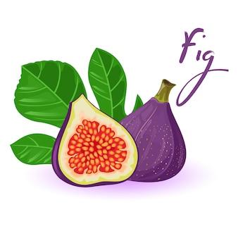 Świeże figi w całości i w połowie z liśćmi. egzotyczny słodki owoc z fioletową skórką.