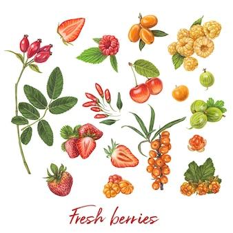 Świeże jagody ręcznie rysowane ilustracji wektorowych