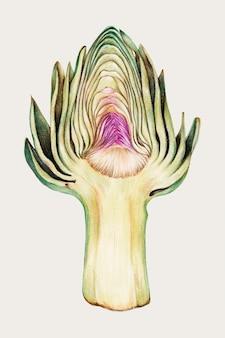 Świeże warzywa karczoch wektor malarstwo żywności