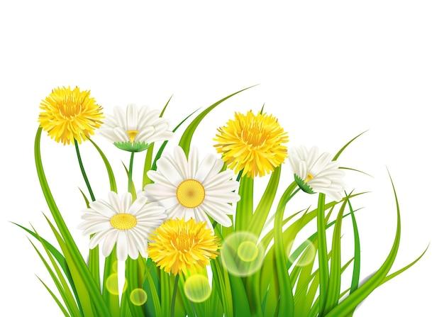Świeże wiosenne soczyste kwiaty rumianku i mniszka lekarskiego i zielona trawa
