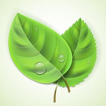 Świeże zielone liście z kroplami wody