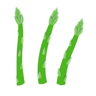 Świeże zielone szparagi warzywo ikona na białym tle