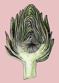 Świeżo ładny organiczny wektor karczocha