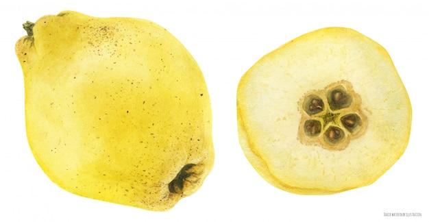Świeży żółty owoc pigwy